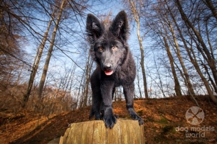 dogmodelsworld-finia