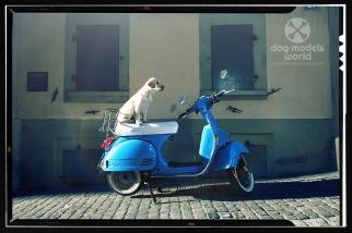 dogmodelsworld_vespa_1