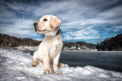 Helle oder ganz dunkle Hunde sind oft etwas schwieriger zu fotografieren. Das Hunde-Model sollte sich gut vom Hintergrund abheben.