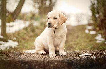 Gehe mit deiner Kamera auf Augenhöhe mit deinem Hunde-Model.