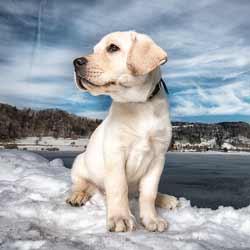 Tutorial 1 - Hundefotografie Basic-Tricks (Teil 1)
