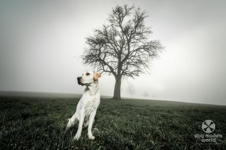 Nebel kann auch bewusst in die Bildgestaltung einbezogen werden.